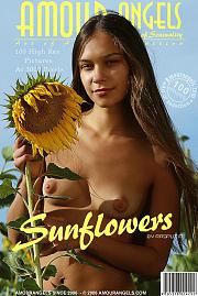 Sunflowers and a beauty